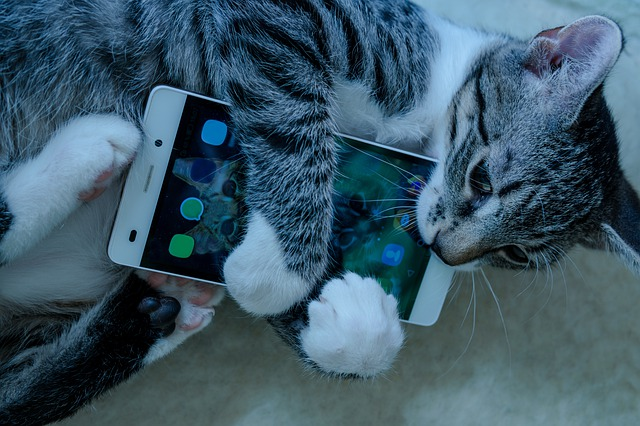 A cat ready to play a distance learning scavenger hunt