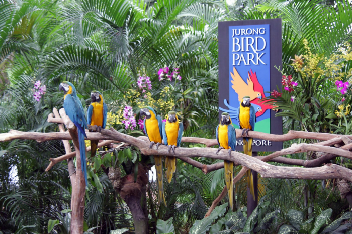The Jurong Bird park. Perfect, to take pictures!